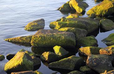 Warnemuende  Felsen mit gruenen Algen im Wasser