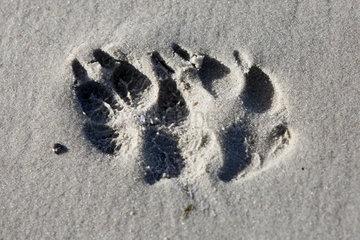 Wustrow  Deutschland - Abdruck zweier Hundepfoten im Sand