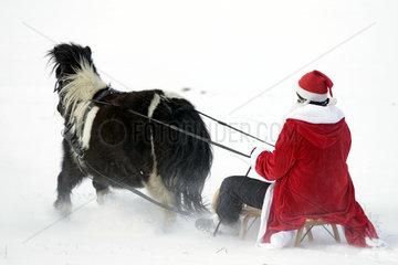 Oberoderwitz  Weihnachtsmann macht mit seinem Shetlandpony eine Schlittenfahrt