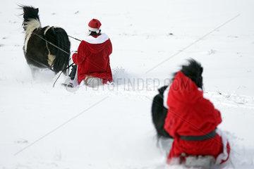 Oberoderwitz  als Weihnachtsmaenner verkleidete Frauen machen mit ihren Shetlandponies eine Schlittenfahrt