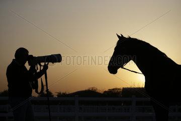 Doha  Silhouette  Pferd wird fotografiert