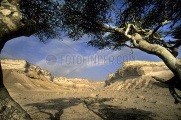 Oman  landscape near Al Khalifah salt basin