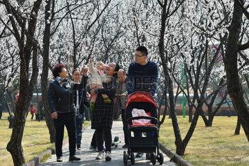 CHINA-SHANXI-ALMOND BLOSSOM-TOURISM (CN)
