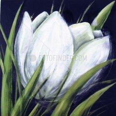 Blume weiss Susanne Liebert