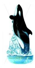 Serie Fische Schwertwal