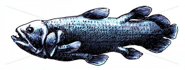 Serie Fische Quastenflosser freigestellt
