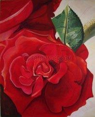 Rose Bluete Liebe Pflanze