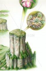 Ausschnitt Pflanzen Natur