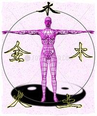 Chinesische Medizin Koerper Aufteilung Yin Yang Ausgleich 5