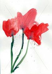 Mohn 1 drei Blueten Blumen