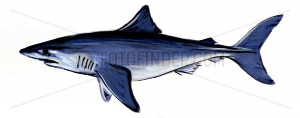 Serie Fische Grundhai Serie Haie