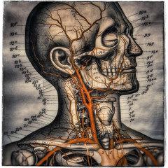 Medizinische Illustration