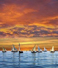 A lots of sail boats in the sunset
