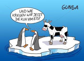 Kuh vom Eis