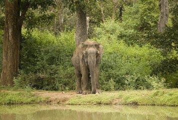 National park elephants