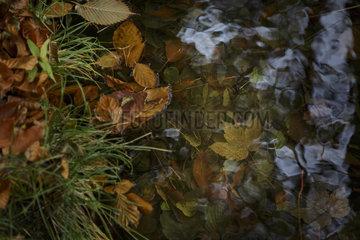 Nahaufnahme von buntem Herbstlaub