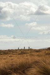 Golfen in Irland