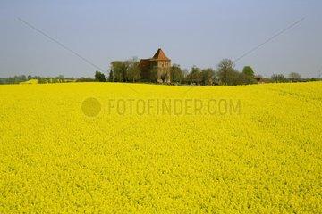 Rapsfelder in Mecklenburg-Vorpommern