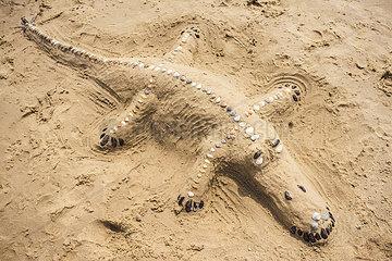 Krokodil am Strand