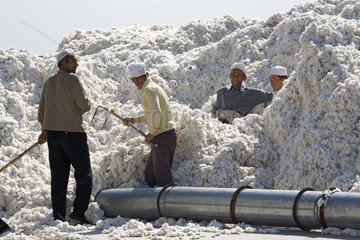 Xinjiang Province  cotton processing