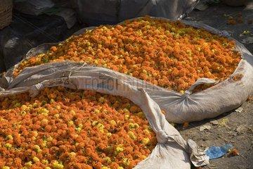 Kalkutta  Blumen auf einem Markt.