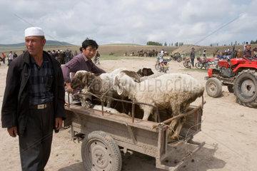 Viehmarkt in Irkide | cattle market in Irkide
