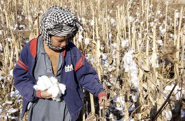 Ein Junge pflueckt Baumwolle in Kunduz
