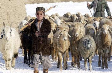 Junge mit einer Herde Schafe im Dorf Baluc