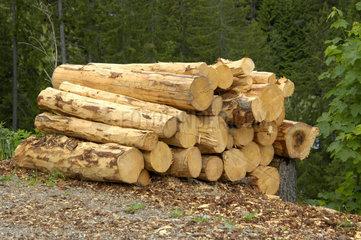 Gefaellte  entrindete und geschnittene Baumstaemme warten auf den Abtransport.