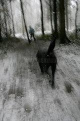 Hund im Winterwald.