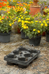 Blumen-  Pflanzen- Setzschale in einer Gaertnerei.