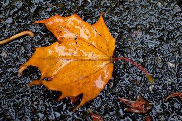 Herbstblatt im Regen.
