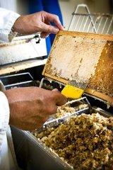 Beekeeping  wax