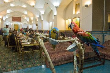 Iran  Yazd  Moshir Al Mamalek hotel garden  parrots