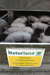 Naturland Schweinezucht