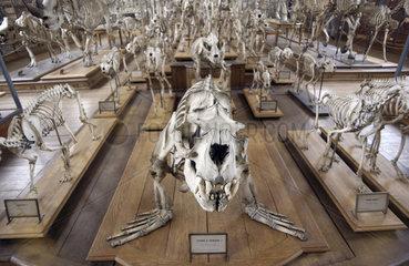 Museum mit Dinosauriern