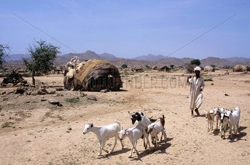 Nomad  Eritrea