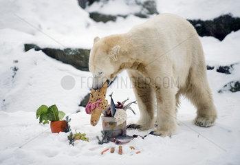 Eisbaer Knut - 4. Geburtstag