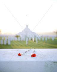 Belgium  War Cemetery Tyne Cot