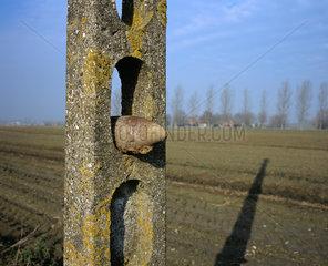 Belgium  Flanders Fields