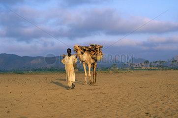 Beduine with camel  Eritrea