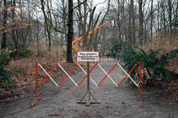 Baumfaellaktion im Tiergarten von Berlin