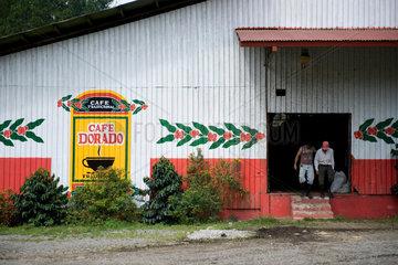 Coffee plantation  Panama