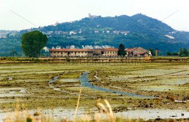 Reisanbau im Piemont  Italien