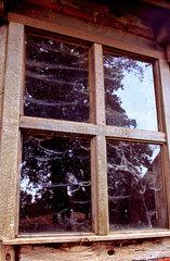 Spinnweben am Schuppenfenster