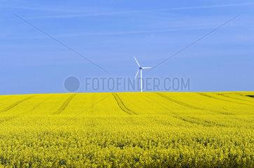 Windrad neben gelbem Rapsfeld