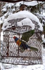 Verschneiter Vogelkaefig