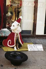 Bettler mit Hund im Ruhrgebiet