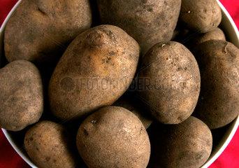 Linda Kartoffeln
