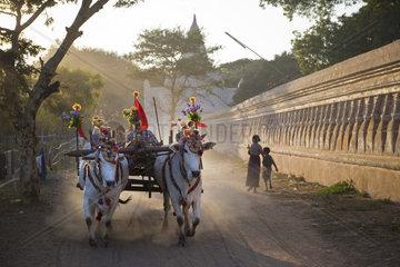 Myanmar  Bagan  daily life  cows